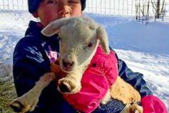 Na blízké farmě - Láska je láska...